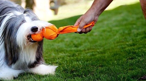 Как научить собаку командам - большой список основных команд с фото и видео