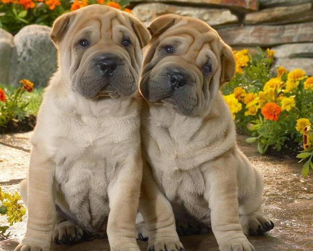 Клички для собак девочек маленьких и крупных пород - красивые и прикольные