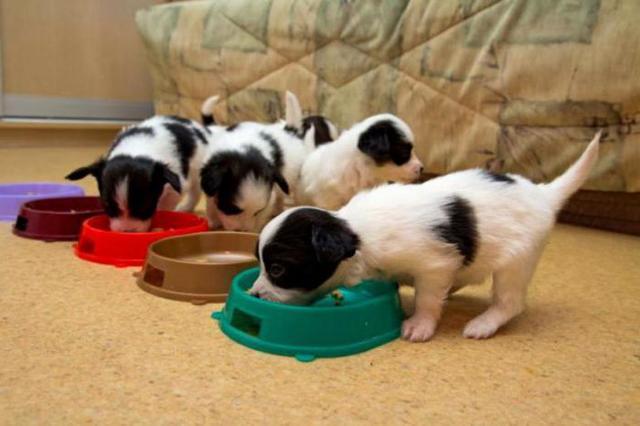 Классы кормов для собак: список, описание, состав, плюсы и минусы