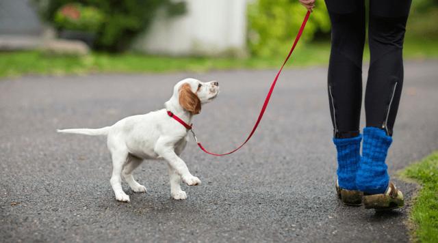 Как приучить собаку к туалету на улице : описание подходов по возрасту и нюансы