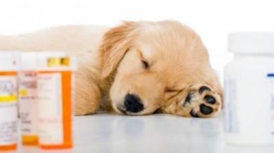 Как дать собаке таблетку или лекарство в виде драже и капсул