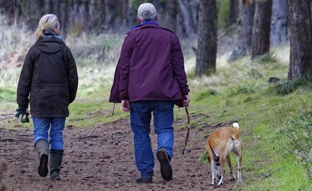 applaws корм для собак: описание, линейка, отзывы, цена и где купить