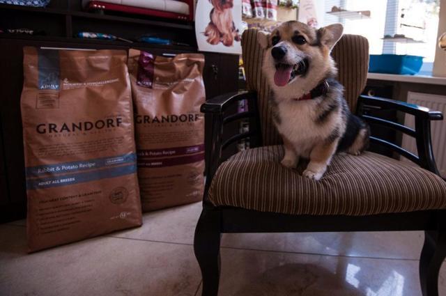 Корм Грандорф (grandorf) для собак: разбор линейки и отзывы