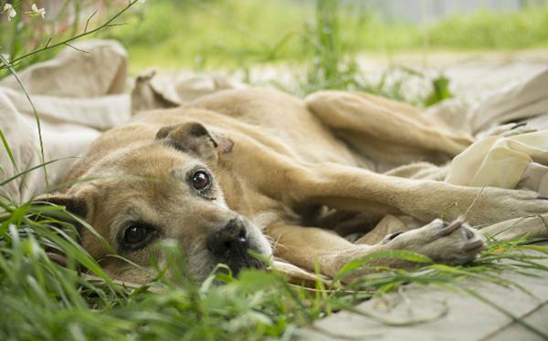 cудороги у собаки - причины спазмов, лечение, если идет пена изо рта