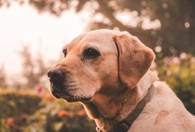 Болезни ушей у собак: симптомы, лечение, профилактика