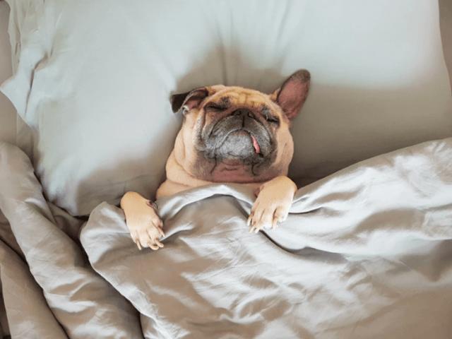 Лишай у собак: виды, признаки, лечение собаки, фото и профилактика