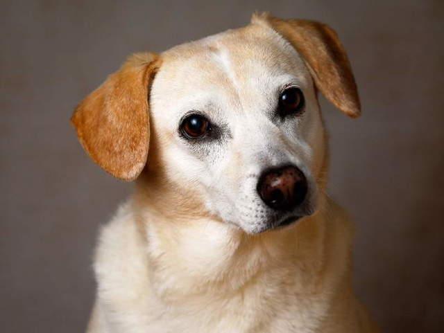 Менингит у собак: причины, симптомы и лечение