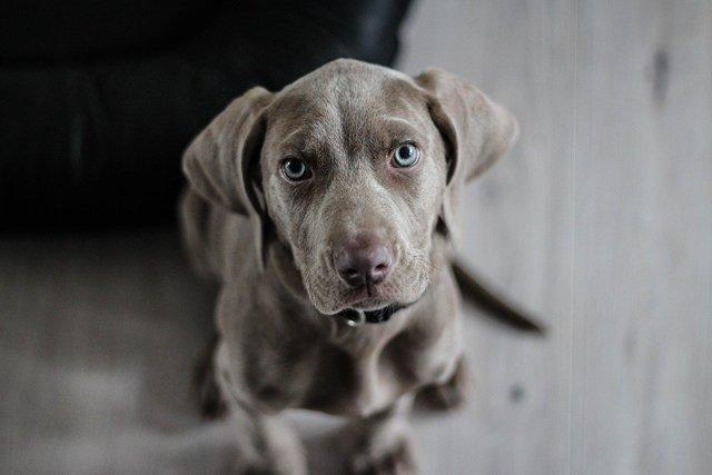 Как определить возраст собаки: по зубам, по человеческим меркам