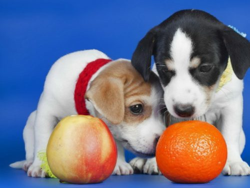 Какие фрукты и ягоды можно и нельзя давать собакам