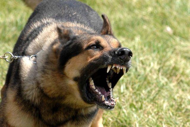 Как отучить собаку лаять на всех подряд, в квартире, на других собак