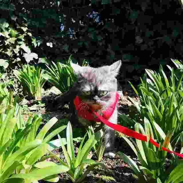 grumpy cat 2.0. – уличная версия. Он заставил всех в приюте влюбиться в себя.