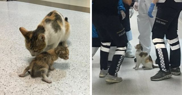 Мать-кошка привела подмогу для спасения своего раненого малыша