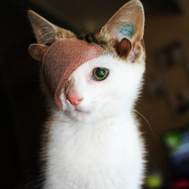 История о том, как котенок с 4 ушами и одним глазом нашел дом