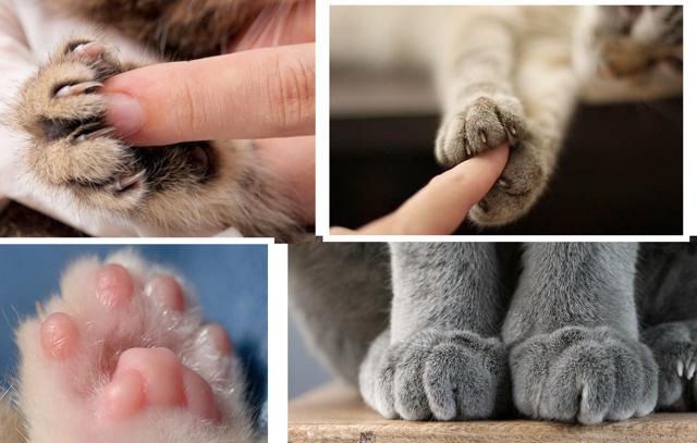 Язык тела вашей кошки с фото: состояния и их описание, как понять