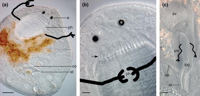 Как яд расписной каракатицы превращает всех в настоящих зомби