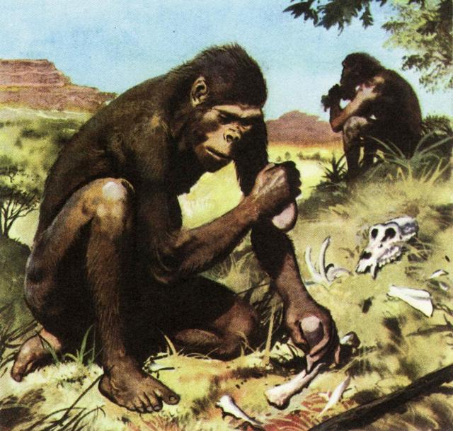 Шимпанзе находятся на уровне развития людей каменного века и всё время эволюционируют