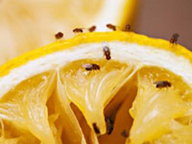 Бурозубка: мощный истребитель насекомых в вашем саду