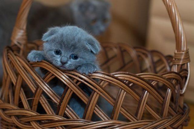 11 причин почему кот не ходит в туалет по-большому и что делать