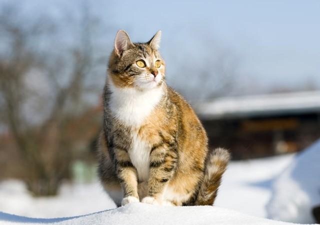 Можно ли стерилизовать беременную кошку и на каком сроке?