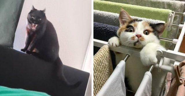 Кошачье спасение: еще 4 истории неравнодушия людей