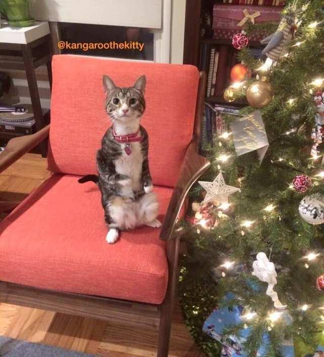 Грустный котенок с особенными ногами находит помощь у неравнодушной женщины