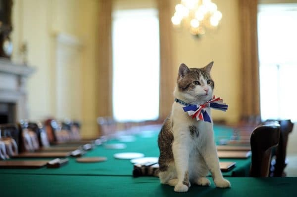 День кошек: всемирный и в разных странах, как отмечают