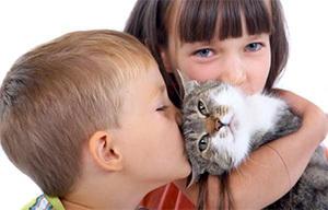 Действительно ли сибирский кот гипоаллергенен
