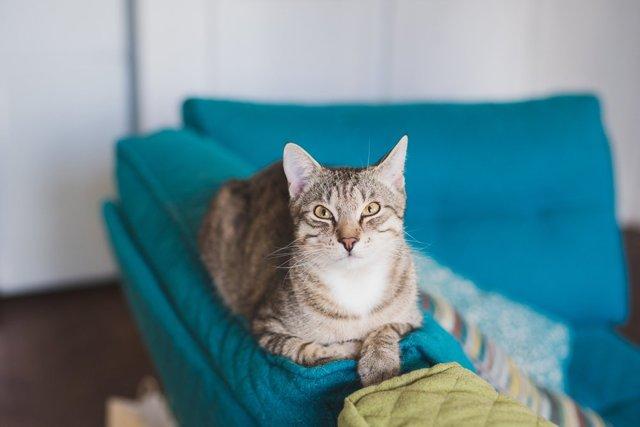 Можно ли заразиться глистами от кошки: виды, методы лечения