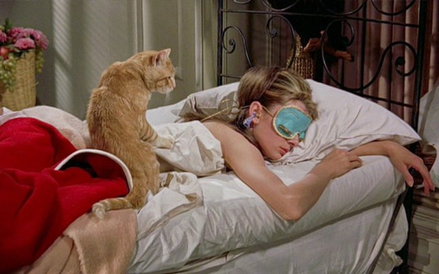 Коты Оранж и Джонси - два героя знаменитых кинолент