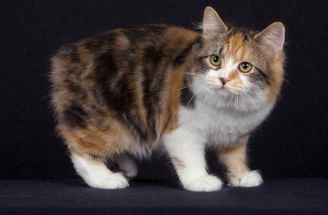 Как назвать трехцветную кошку, примеры имен, лучшие клички