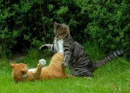 Что нужно знать о кошачьих драках: важные факты и советы
