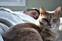 Бешенство у кошек: симптомы заражения, опасность для человека