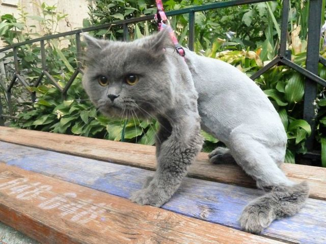 как похудеть коту в домашних условиях
