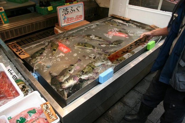 Фугу: самая ядовитая в мире рыба ценой в состояние, оказалась невкусной