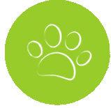 acana (Акана) для кошек и котят: состав сухих кормов, лакомств, цена