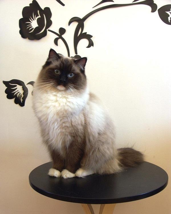 Большая кошечка или 16 килограмм очарования