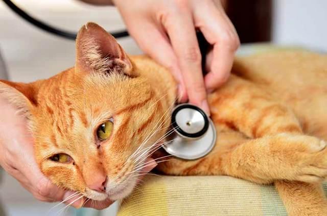 Выделения у беременной кошки: после родов и во время, есть ли опасность?