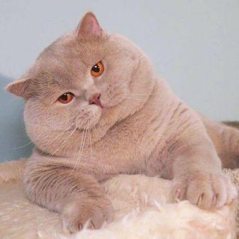 8 причин, зачем кошки мнут лапами одеяло и человека, хозяина