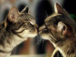 В каком возрасте кошки начинают гулять первый раз, как им помочь