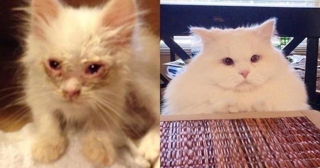 Из грязи в князи: тощий котенок превращается в здорового белого котяру