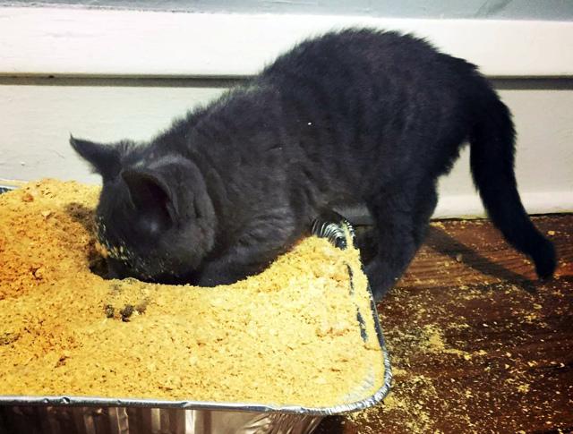 Метаморфозы уличных котят в Домашних Доминаторов