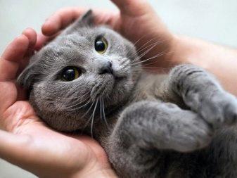 Можно ли кошкам сладкое: разрешенные и запрещенные продукты