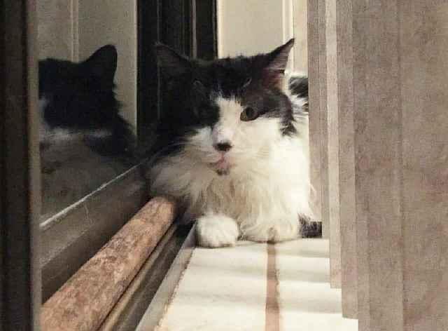 Из чудовища в красавчика: история спасения кота со свалявшейся шерстью
