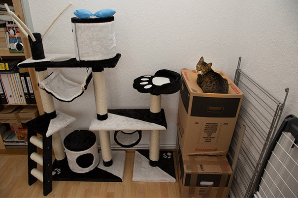 11 примеров феноменальной кошачьей логики: фото-свидетельства