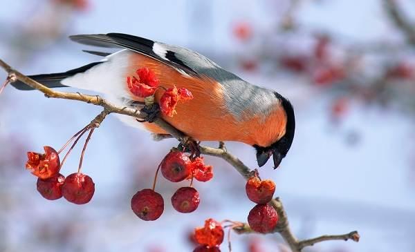 Когти птички и рука человека: угадайте размер птицы