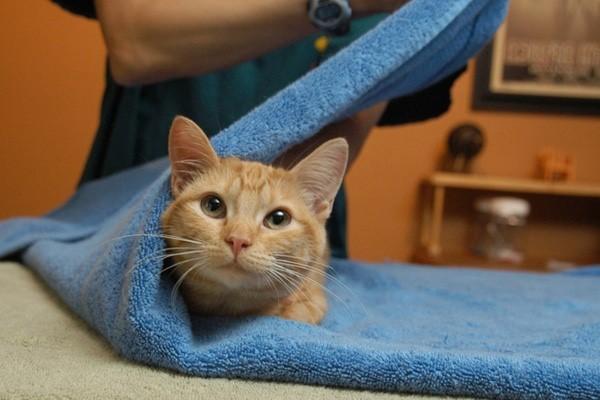 Как дать таблетку кошке: ТОП 6 способов на все случаи жизни