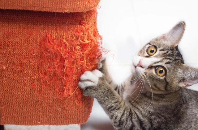 Почему кошки мурлыкают, когда их гладишь и в другие моменты