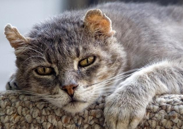 12 способов продлить жизнь вашей кошки или кота, признаки старости