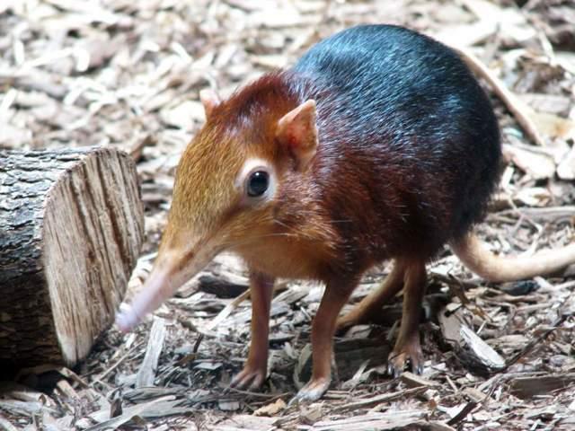 Хоботковая собачка: удивительный обитатель леса