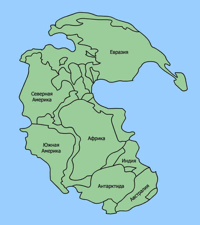 Щитень: доисторический обитатель дачных луж и канав России